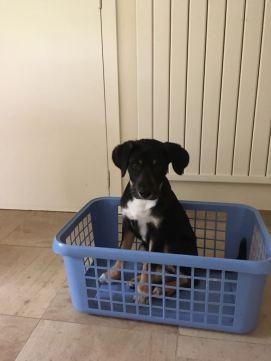Emile, chien de Beffe.JPG